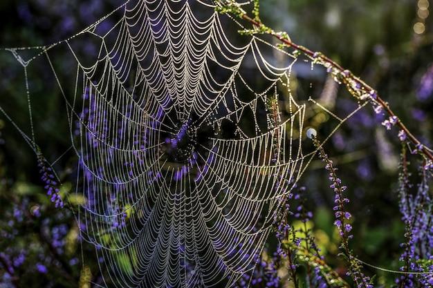 Bela foto de uma teia de aranha pendurada nos galhos
