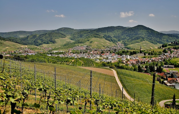 Bela foto de vinhedos verdes e montanhosos ensolarados com o fundo da cidade de kappelrodeck