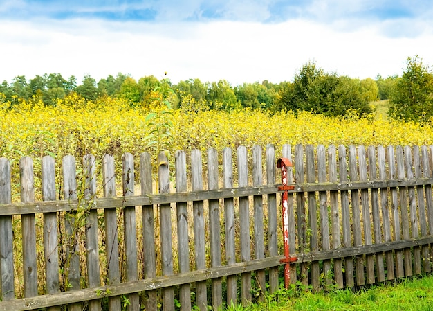 Bela foto do campo cheio de flores amarelas e árvores atrás da velha cerca de madeira