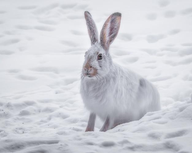 Bela foto do coelho branco no bosque nevado
