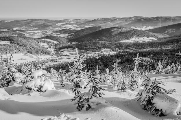 Bela foto dos pinheiros e montanhas cobertas de neve