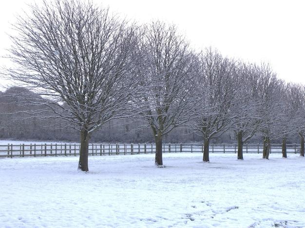 Bela foto em tons de cinza de árvores nuas alinhadas em um terreno coberto de neve durante o inverno