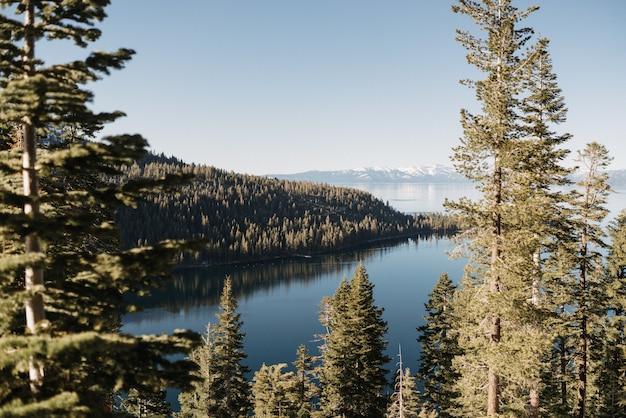 Bela foto grande de um mar rodeado por pinheiros