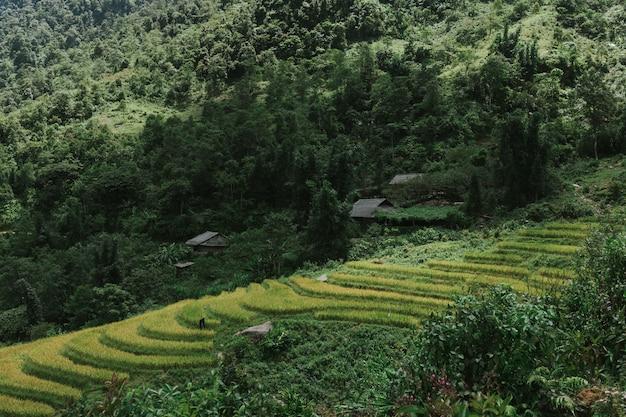 Bela foto horizontal de uma floresta com árvores verdes durante o dia