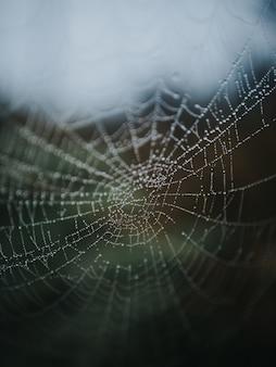 Bela foto macro de uma teia de aranha em uma floresta