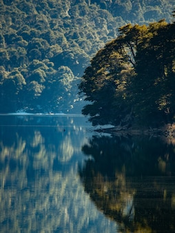 Bela foto vertical de um reflexo de uma floresta em um lago