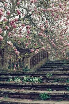 Bela foto vertical de uma velha escadaria de pedra perto de uma cerejeira
