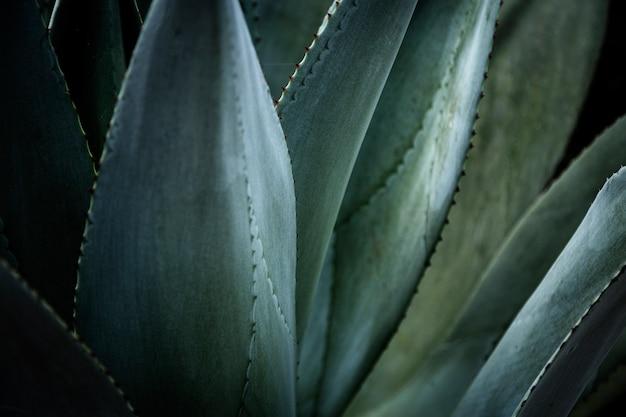 Bela fotografia macro planta tropical