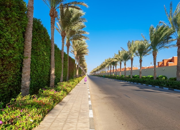 Bela imagem de longa estrada com belas palmeiras crescendo na beira da estrada.