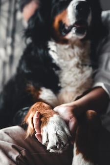 Bela jovem abraçando seu cachorro de estimação em casa