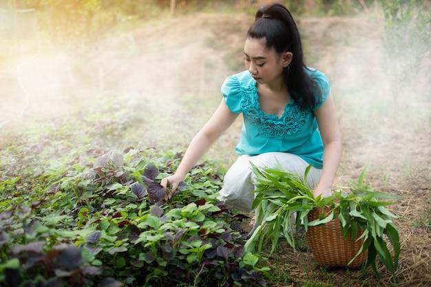 Bela jovem jardineira asiática com uma cesta com vegetais de espinafre colhidos na hora