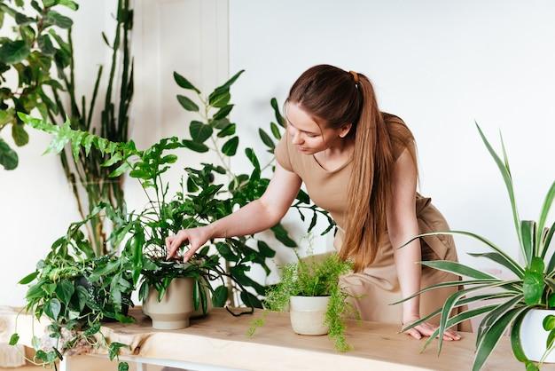 Bela jovem toca uma licença da planta em casa com cuidado e em pé na frente da mesa. cuidados com plantas domésticas