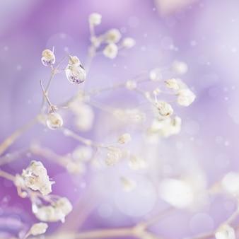 Bela luz abstrata e fundo suave desfocado com flores roxas