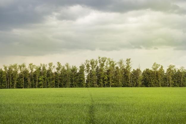 Bela luz da manhã no parque público com campo de grama verde e árvore