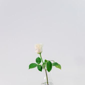 Bela luz fresca flor em vaso com água