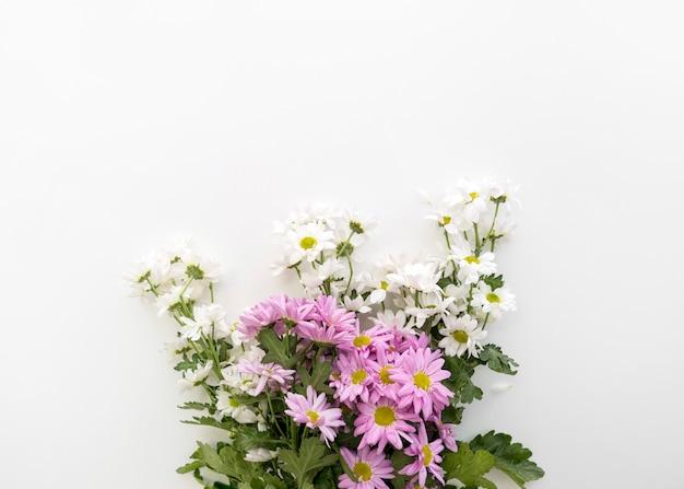 Bela margarida flores bando em fundo branco