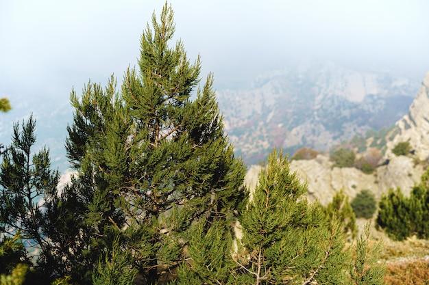 Bela montanha com florestas no fundo da névoa da manhã