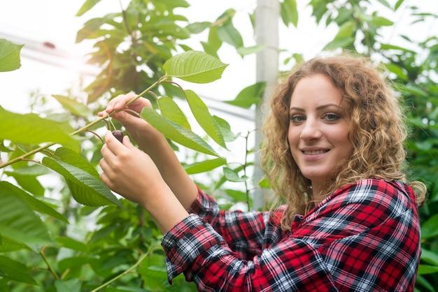 Bela mulher agricultora segurando frutas cereja em pomar verde