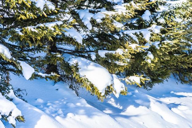 Bela natureza ao ar livre paisagem com árvore de natal
