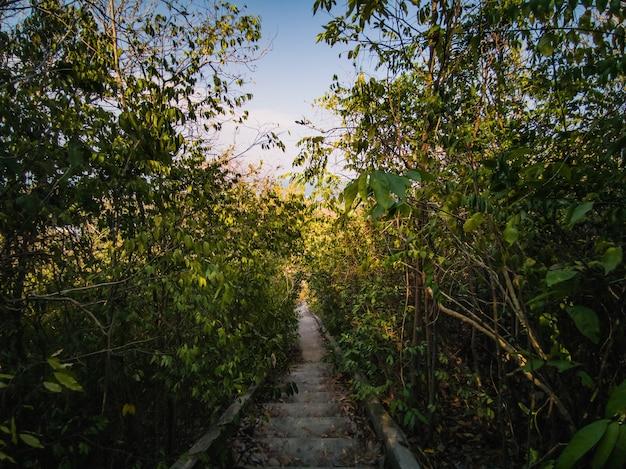 Bela natureza e escada para o topo da ilha koh lan pattaya thailand.koh lan island é a famosa ilha perto da cidade de pattaya, o destino de viagem na tailândia.