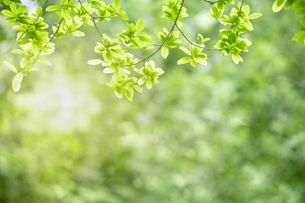 Bela natureza ver folha verde sobre fundo verde borrado sob a luz solar.