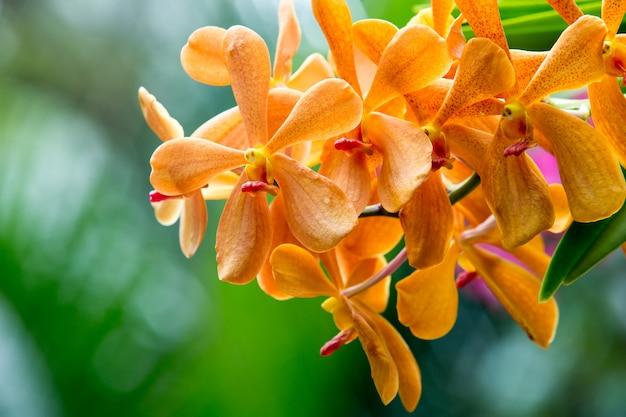 Bela orquídea em fundo verde