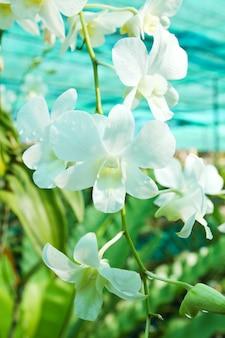 Bela orquídea no jardim