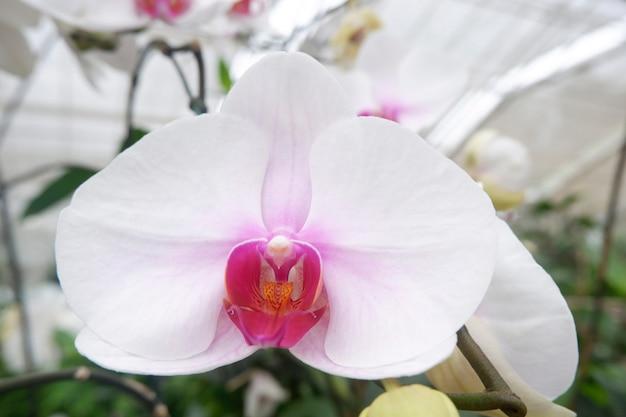 Bela orquídea no jardim.