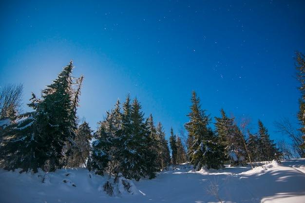 Bela paisagem com altos pinheiros crescendo entre um monte de neve branca