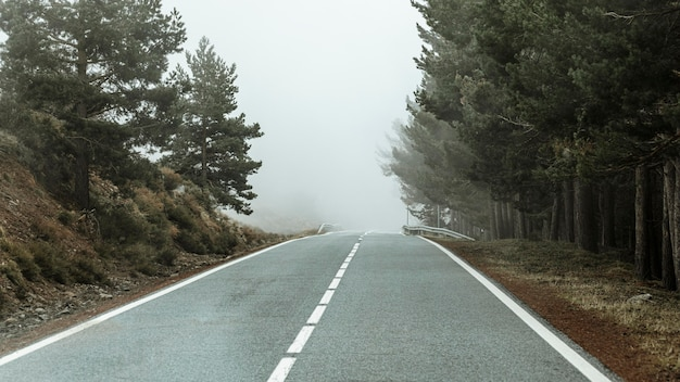 Bela paisagem com árvores e estradas