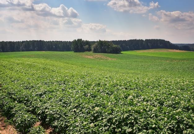 Bela paisagem com campo de batatas e céu azul nublado.