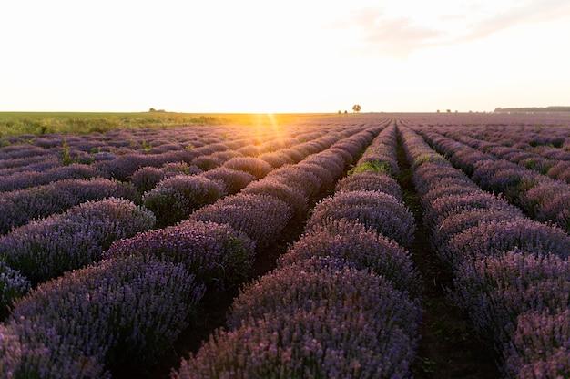 Bela paisagem com campo de flores