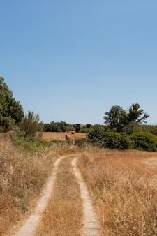 Bela paisagem com estrada