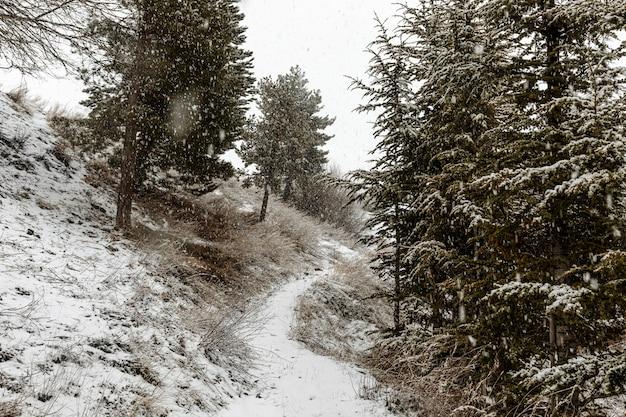 Bela paisagem com flocos de neve