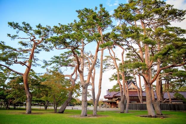 Bela paisagem com grandes árvores e grama verde