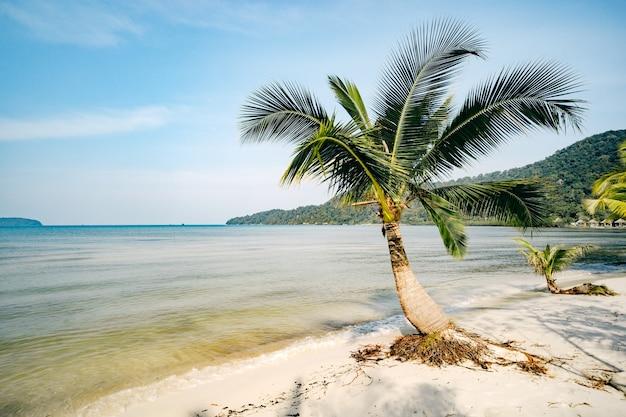Bela paisagem com grandes palmeiras verdes em primeiro plano ao fundo de guarda-sóis turísticos e espreguiçadeiras em uma bela praia exótica