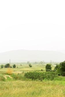 Bela paisagem com nevoeiro