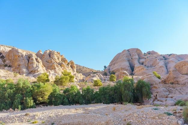 Bela paisagem com pedras de gengibre, plantas de primavera verde, árvore em petra, na jordânia