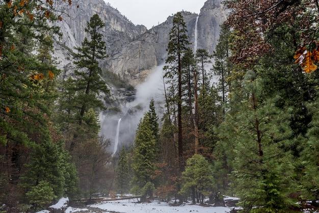 Bela paisagem com pinheiros altos no parque nacional de yosemite, califórnia, eua
