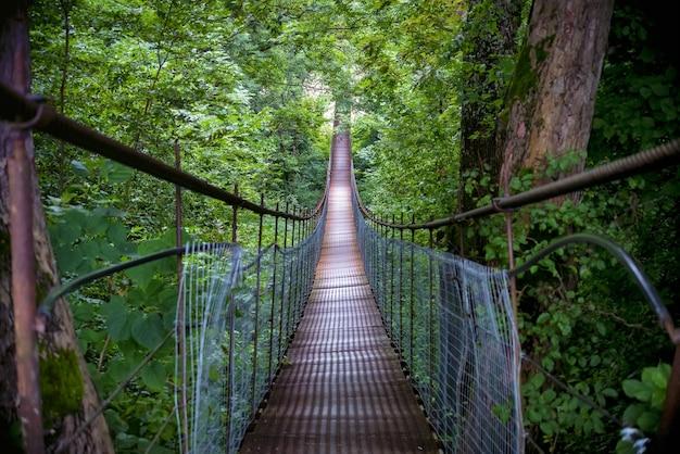 Bela paisagem com ponte estreita de metal que atravessa a floresta de outono brilhante