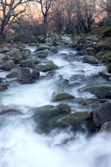 Bela paisagem com torrente de água no meio da floresta