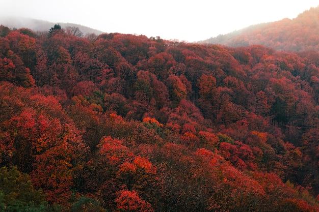 Bela paisagem da floresta basca com cores de outono no parque natural aiako harriak