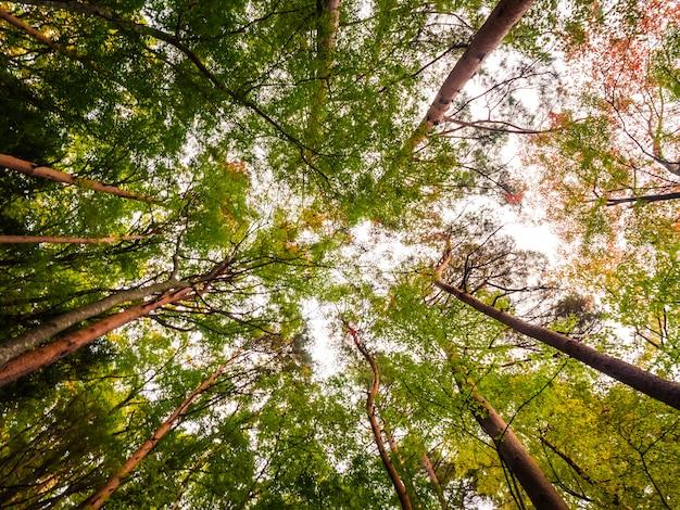 Bela paisagem da grande árvore na floresta com vista de baixo anjo