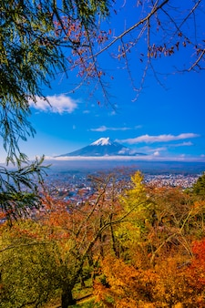 Bela paisagem da montanha fuji ao redor da árvore de folha de plátano na temporada de outono