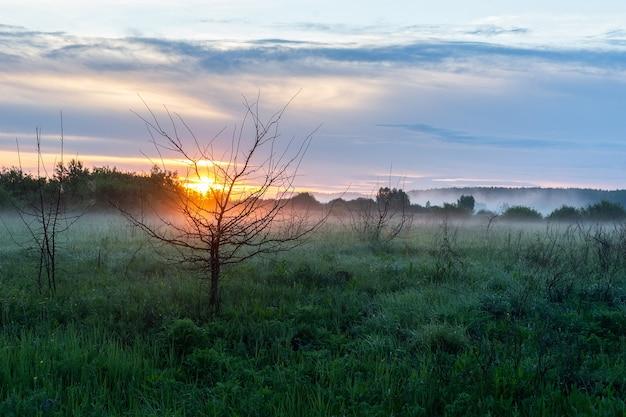 Bela paisagem de campo e floresta ao pôr do sol