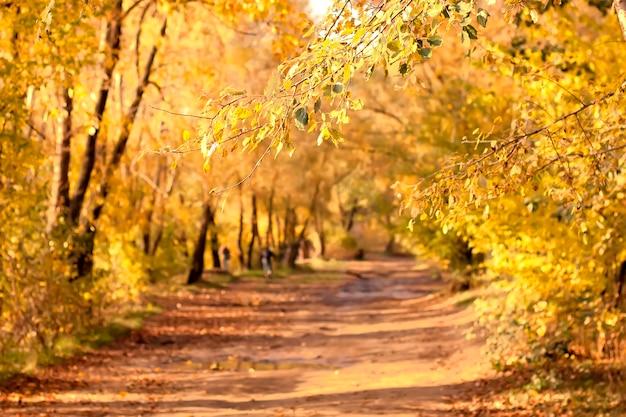 Bela paisagem de floresta colorida de amarelo no outono com espaço de cópia de foco de estrada de terra em primeiro plano