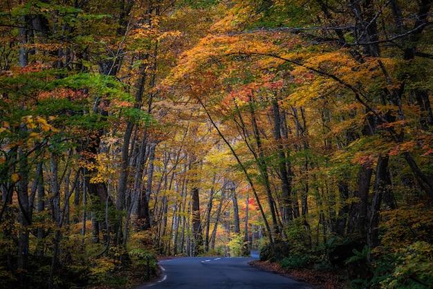 Bela paisagem de floresta de outono na prefeitura de aomori, no japão