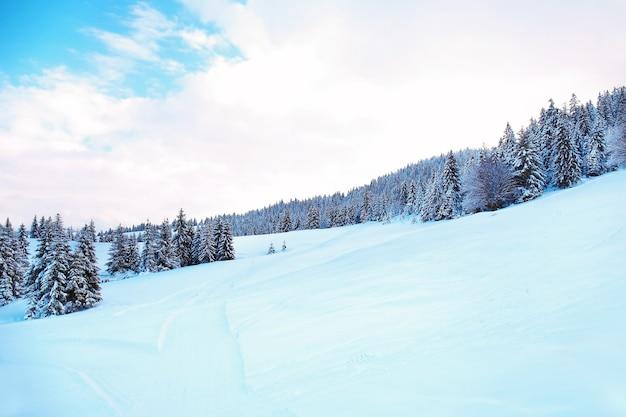 Bela paisagem de floresta de pinheiros nevados em uma região montanhosa