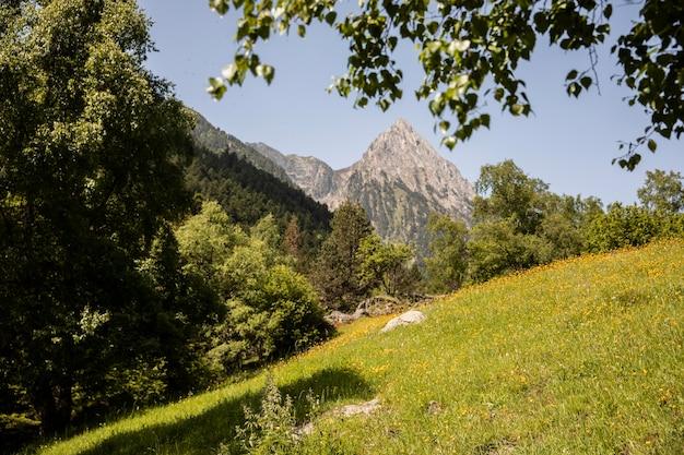 Bela paisagem de floresta montanhosa