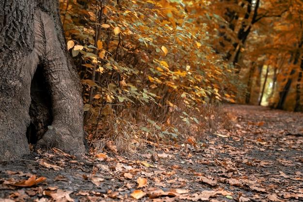 Bela paisagem de floresta no outono, trilha de folhas caídas e tronco de árvore